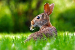 rabbit-1903016_1280